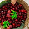 Mordedor Oli&Carol Mery the Cherry